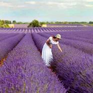 Paniers gourmands de Provence Cadeaux gourmands de Provence