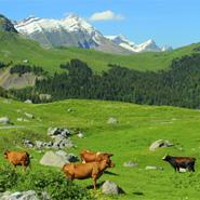 Paniers gourmands de Savoie Cadeaux gourmands de Savoie